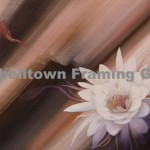 Original Arwork for Sale at Campbelltown Framing Gallery beautiful flower in bloom